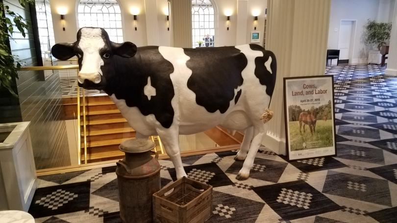 fiberglass cow in hotel
